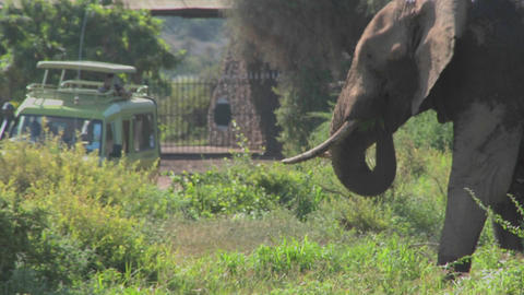 A massive African elephant poses at the entrance gate to Amboceli National Park in Tanzania Footage
