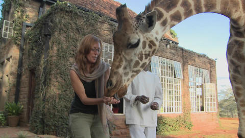 A giraffe gives a woman a kiss in Africa Stock Video Footage
