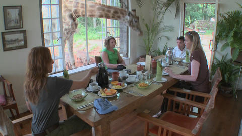 A giraffe interrupts a breakfast at a house in Africa Stock Video Footage