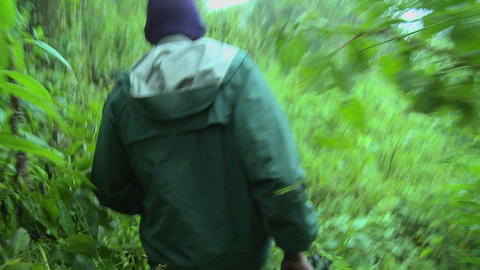 Men move through the jungle on the Congo Rwanda border Stock Video Footage