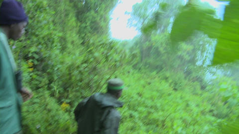 Men move through the jungle on the Congo Rwanda border Stock Video Footage