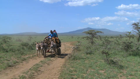 A horescart with a rider makes its way down a dirt road... Stock Video Footage