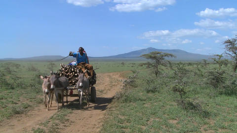 A horescart with a rider makes its way down a dirt road in East Africa Footage