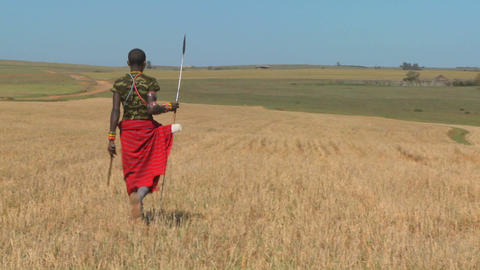 A Masai warrior walks through wheat fields in northern Kenya Footage
