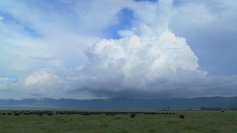 A wide shot of spectacular cloud formations on the plains of Africa, with cape buffalo grazing below Footage