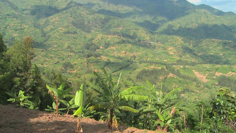 Tilt up reveals the lush countryside and farmland of Rwanda Stock Video Footage