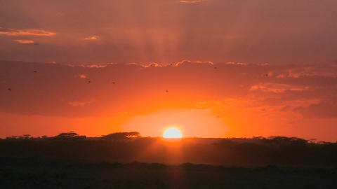 A radiant sunrise on the plains of Africa Stock Video Footage
