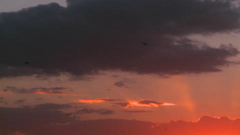 Birds fly into the sunset on the plains of Africa Footage