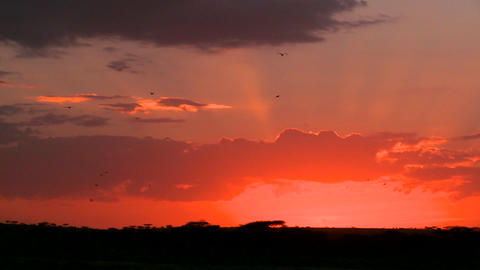 Birds fly into the sunset on the plains of Africa Stock Video Footage