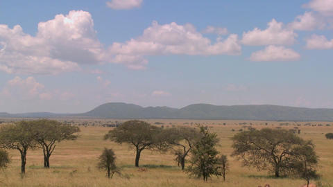 Time lapse shot of clouds moving over the Serengeti plain Stock Video Footage