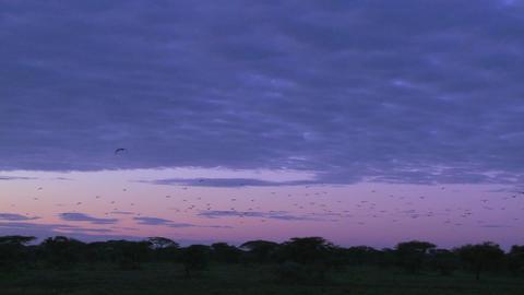 Birds migrate across a purple sky Stock Video Footage