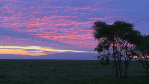 Birds migrate across a multicolored sky on the plains of Africa Footage