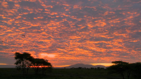 A gorgeous red and orange sunset on the plains of Africa Stock Video Footage