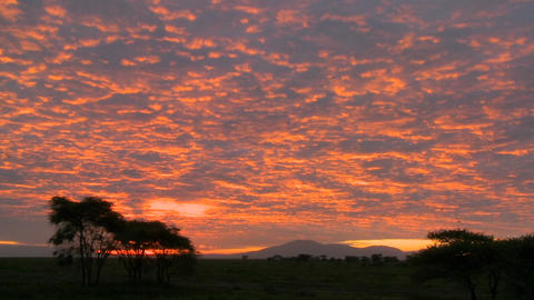 A gorgeous red and orange sunset on the plains of Africa Footage