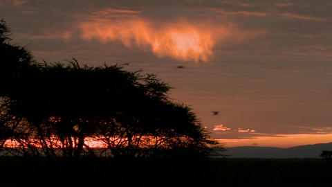 Birds fly against a red orange sky at dawn on the plains... Stock Video Footage