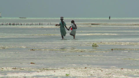 A young girl leads her sister into a tidal bay Footage