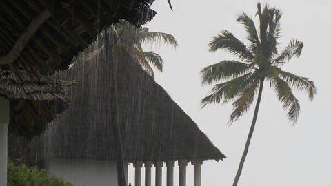Rain falls heavily at a tropical beach resort with palms in background Footage