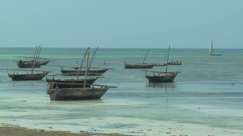 African dhow sailboats along the azure coast of Zanzibar,... Stock Video Footage