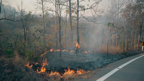 Bushfire near road in national park. Climat change crisis. Forest wildfire in Live Action