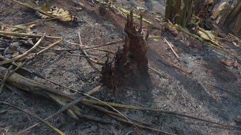 Global warming crisis. Slash and burn agriculture. Climate change, deforestation Live Action