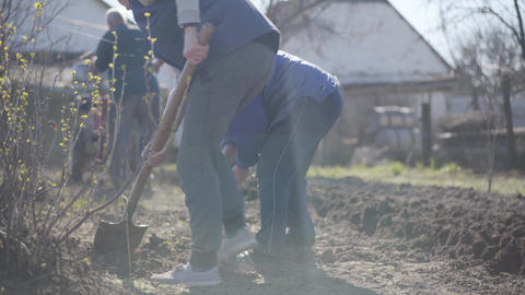 Adult Caucasian people working in rural garden on sunny spring day. Men and Live Action