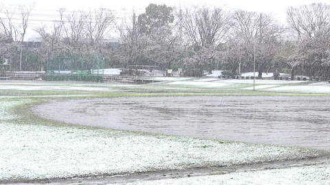 Baseball ground, snow and cherry blossoms GIF