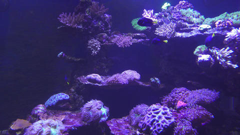 tropical fish and corals underwater 4k Footage