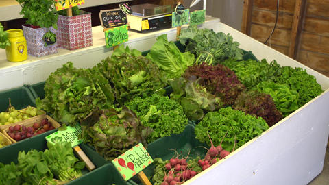 Lettuce greens at a farmers market Footage