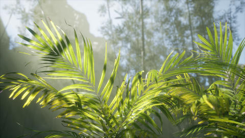 bright light shining through the humid misty fog and jungle leaves Live Action