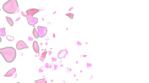 4K cherry blossom petals flowing in the wind Animation