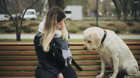 Attractive woman sits with retriever labrador happy dog on bench and talks on Live Action