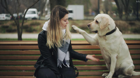 Attractive woman sits with retriever labrador happy dog on bench in the city Live Action
