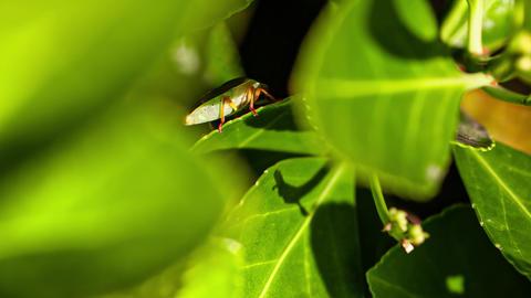 Bedbug on the leaf 3 Live Action