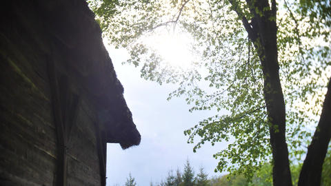 Sun rays between tree and wooden house Live Action
