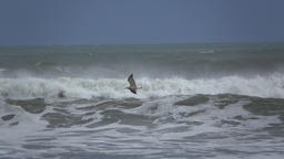 Seagull fly along a stormy beach Footage