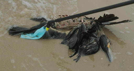Death of birds, environmental disaster at sea Live Action