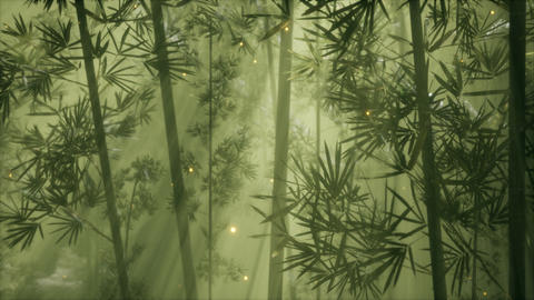 asian bamboo forest with morning fog weather Live Action