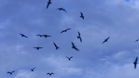 Black birds in the dramatic sky Footage