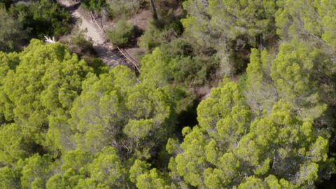 AERIAL: Over Green Jungle Forest on Mallorca Island Sunny Weather, Sunshine Live Action