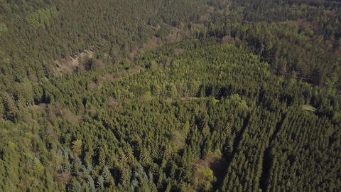 AERIAL: Flight over german forest with Sunshine in Fall or Winter Live Action
