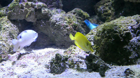 colorful exotic fish on the bottom of a coral reef Live Action