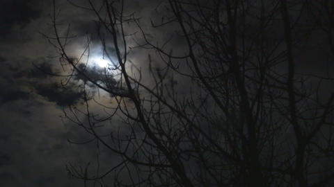Time lapse of the moon glowing behind the clouds and tree Footage