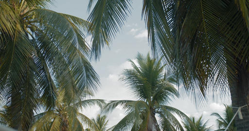 A group of palm trees next to each other Live Action