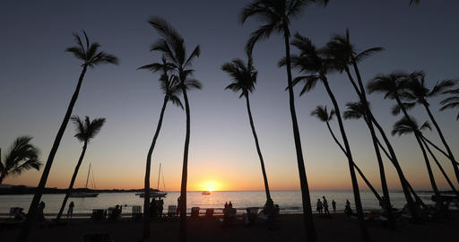 Paradise beach sunset or sunrise with tropical palm trees. Summer travel Live Action