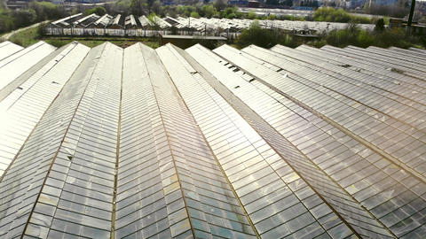Large industrial greenhouses. The sun's rays sparkle in the glass roof of the Live Action