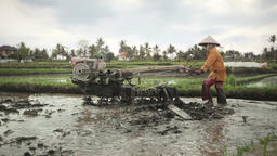 Indonesian farmer using old tiller tractor in rice field near Ubud Bali Footage