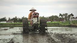 Farmer plowing soil with tractor on rice field near Ubud, Bali Footage
