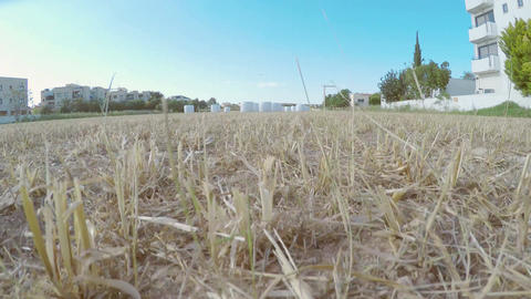 Aerial shot of harvested field filmed with quadrocopter. Video shot with drone ビデオ