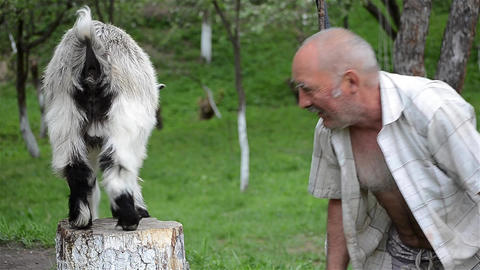 Man playing with a kid goat and stand head to head 01 Footage