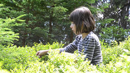 Young girl sits in a bush blueberries are eaten ripe and juicy fruit 02 Footage
